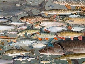 John Lyons Wisconsin fish